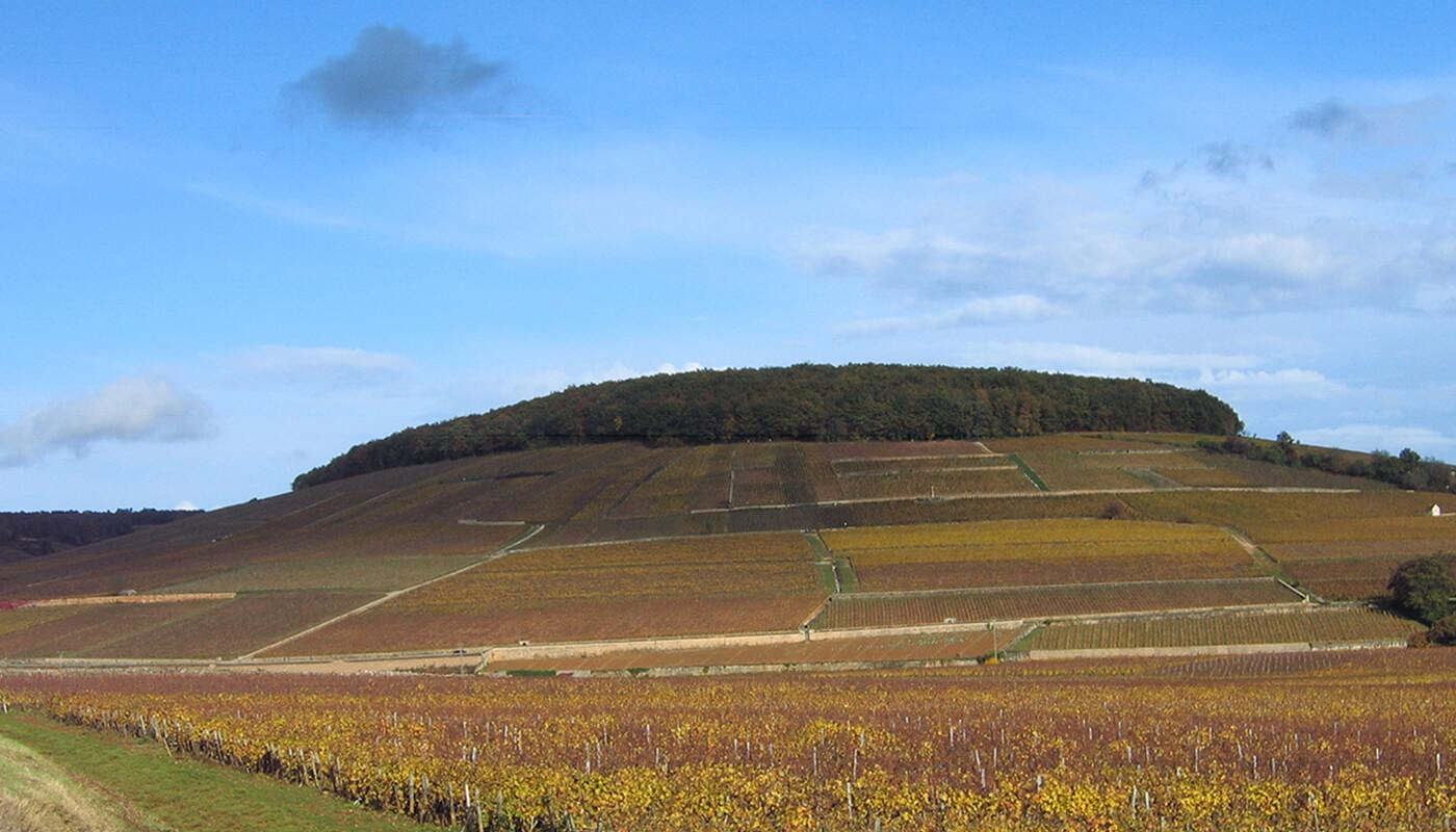 コルトンの丘